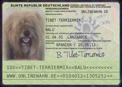 Kontakt zu Tibet-Terrier Balu