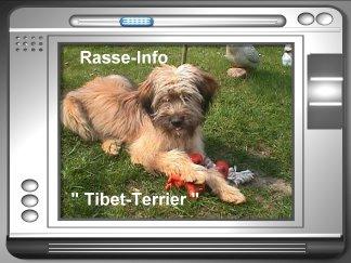 Rasse Info Tibet-Terrier
