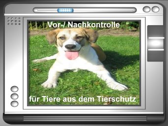 Vor-/Nachkontrolle für Tiere aus dem Tierschutz
