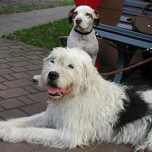Max und Gorda